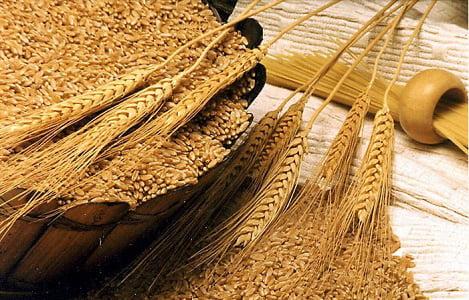 Thị trường NL TĂCN thế giới ngày 23/3: Gía lúa mì tiếp tục tăng