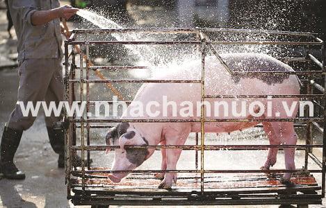 Ngành chăn nuôi năm 2017: Bức tranh sáng tối đan xen