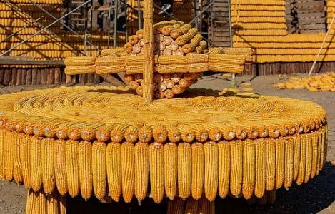 Nhập khẩu ngô tăng trên 50% cả lượng và trị giá