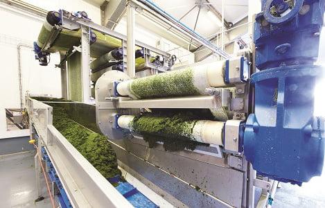 OLMIX: Đột phá công nghệ từ tảo biển