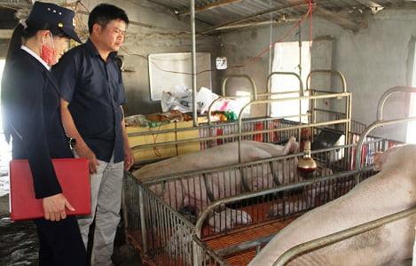 Quảng Bình: Đẩy mạnh xây dựng cơ sở an toàn dịch bệnh trong chăn nuôi