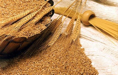 Thị trường NL TĂCN thế giới ngày 9/7: Giá lúa mì giảm hơn 2%
