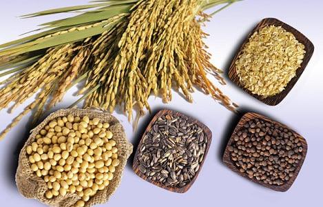 Thị trường NL TĂCN thế giới ngày 7/3: Giá lúa mì giảm 1%