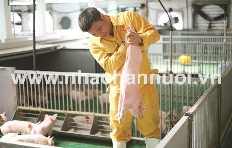 Thời của chăn nuôi công nghệ cao