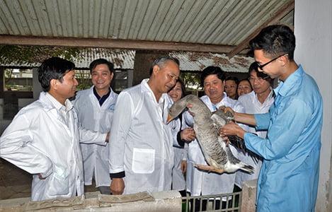 Trung tâm Nghiên cứu Vịt Đại Xuyên: 3 năm nuôi giữ giống gốc không được cấp kinh phí