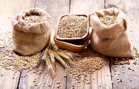 Thị trường NL TĂCN thế giới ngày 13/6: Giá lúa mì đạt mức cao nhất 2 tuần