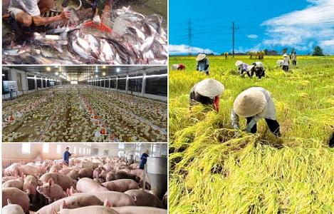Chính phủ ra nghị định khuyến khích doanh nghiệp đầu tư vào Nông nghiệp, nông thôn