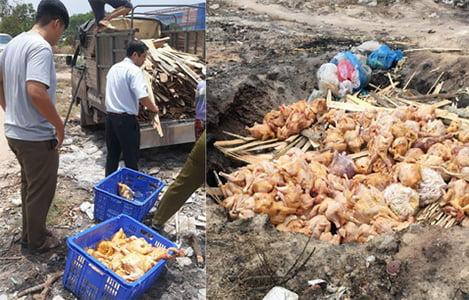 Đồng Nai: Tiêu hủy 290 con gà không có dấu kiểm dịch