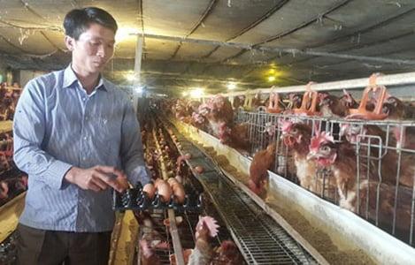 """Nuôi gà đẻ """"siêu khỏe"""", anh nông dân U40 bỏ túi gần 4 tỷ đồng/năm"""