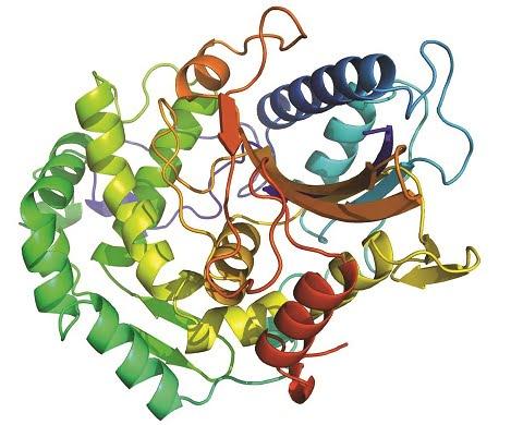 Sự ảnh hưởng của Pectin tới tỷ lệ tiêu hóa vật nuôi và tình hình ứng dụng Pectinase