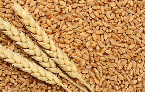 Thị trường NL TĂCN thế giới ngày 28/6: Giá lúa mì giảm