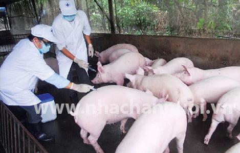 THÚ Y HÀ NỘI: Nỗ lực để chăn nuôi phát triển