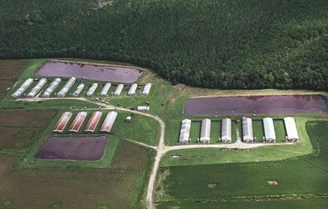 Trang trại sản xuất điện từ chất thải lợn