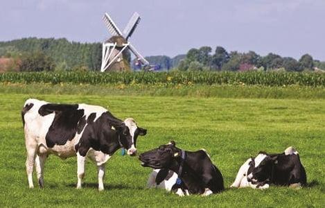 Hà Lan: Hiệu quả từ chính sách quản lý môi trường chăn nuôi