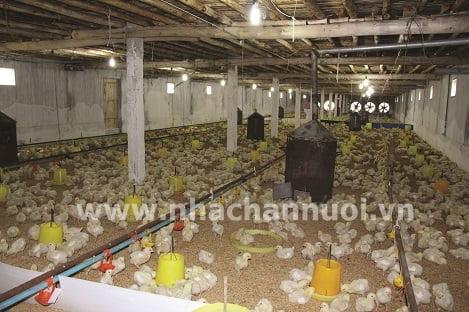 Giám sát hành vi của gà nuôi giúp ngăn ngừa ngộ độc thực phẩm