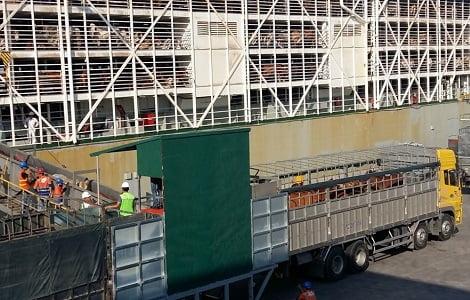 Tàu chở hơn 4.000 con bò nhập từ Úc lần đầu cập cảng Cái Lân