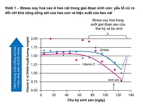 Điều chỉnh chế độ dinh dưỡng cho heo nái trong giai đoạn chuyển tiếp khi sinh