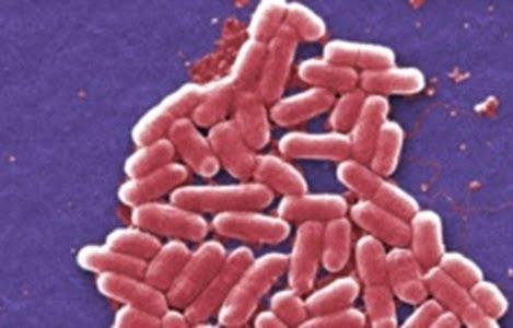 Kháng thuốc lan truyền mạnh từ động vật sang người