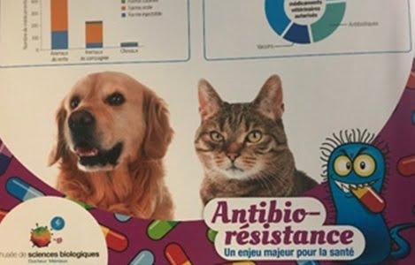 Quản lý kháng sinh trong thức ăn chăn nuôi, thủy sản tại Việt Nam và bài học quản lý kháng sinh của Pháp