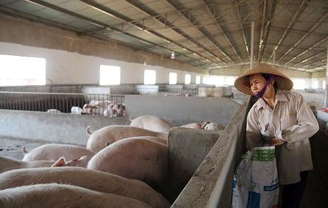 Dự án LIFSAP Lâm Đồng: Hình thành chuỗi liên kết sản xuất với thị trường