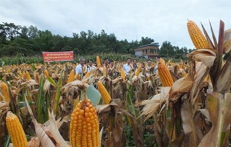 Nguyên liệu thức ăn chăn nuôi có thể biến động mạnh