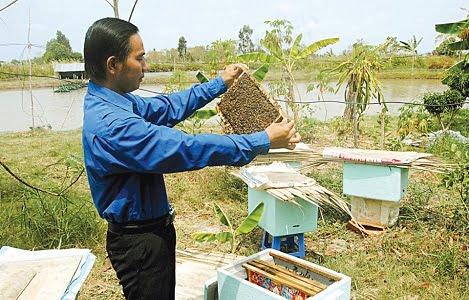 Nuôi ong ruồi trong thùng xốp: Chi phí thấp, dễ áp dụng