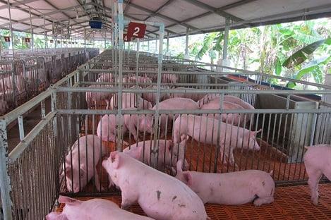 Đồng Nai: 556 trang trại cấp chứng nhận an toàn dịch bệnh