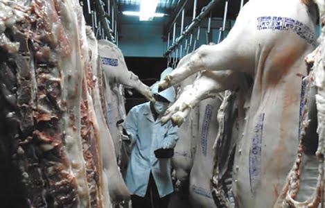 Thiết lập chuỗi cung ứng thịt heo từ Bình Định đến các chợ Đà Nẵng