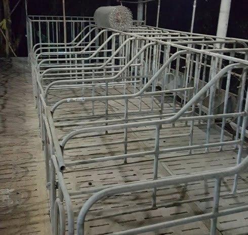 40% người chăn nuôi đã phải treo chuồng do giá giảm thời gian vừa qua.
