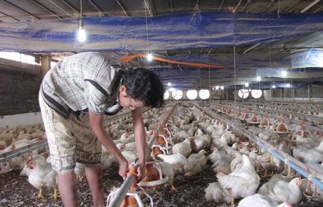 Đồng Nai: Tổng đàn gà tăng gần 6,7 triệu con