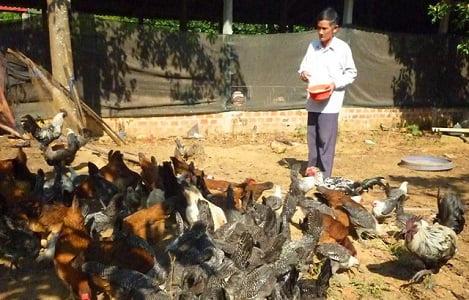 """Lão nông """"ném"""" hơn nửa tỷ để thuần dưỡng nhiều giống gà quý hiếm"""