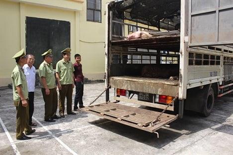 Nghi xuất hiện tình trạng lợn nhập lậu vào Việt Nam