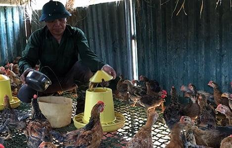 Vươn lên từ mô hình trang trại chăn nuôi kết hợp