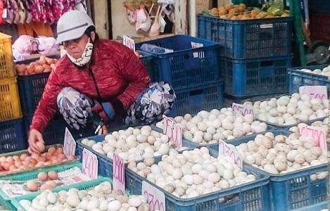 Cần Thơ: Giá trứng gia cầm tăng nhẹ