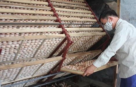 Bắc Giang: Giá trứng gia cầm tăng gấp đôi so với cùng kỳ năm ngoái