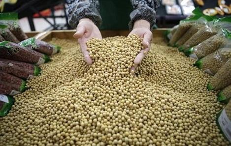 Tranh thủ để nhập khẩu đậu nành với giá có lợi từ Mỹ