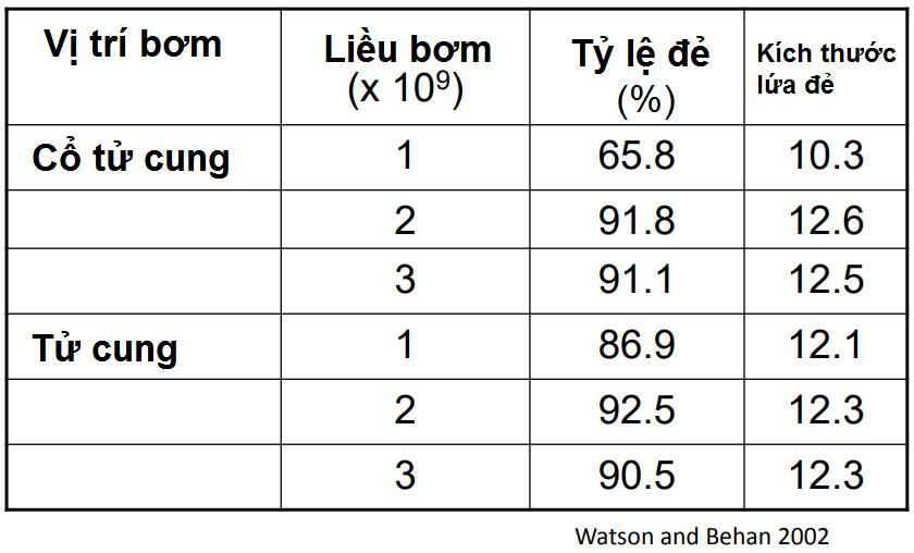 Sự khác biệt giữa PCAI và phối giống truyền thống là ở vị trí bơm tinh. (Hình minh họa)