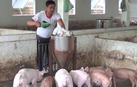 Bắc Giang: Giá lợn hơi tăng cao, đạt 57 - 58 nghìn đồng/kg
