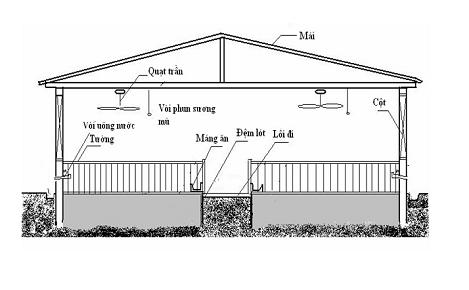 Mô hình chuẩn nuôi heo sử dụng đệm lót sinh học