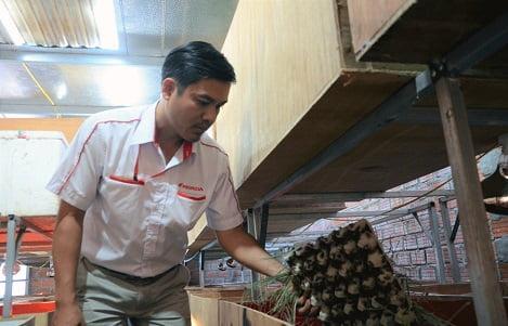 Gia Lai: Triển vọng nghề nuôi côn trùng, bò sát thương phẩm