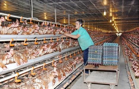 Chăn nuôi Việt Nam 2018: 6 tháng cuối năm sẽ diễn biến ra sao?