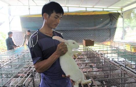 Hiệu quả từ mô hình nuôi thỏ New Zealand