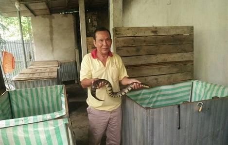 Độc đáo mô hình nuôi rắn ri voi trong thùng gỗ, ít bệnh, chóng lớn