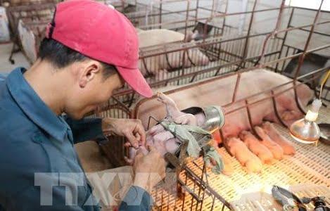 Cuộc chiến thương mại Mỹ – Trung: Nông nghiệp Việt chịu tác động gì?