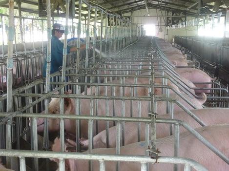 Vĩnh Phúc: Toàn tỉnh có hơn 1.000 trang trại
