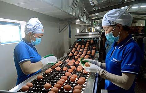 Trứng gà Đồng Nai bay sang Hàn Quốc nếu đảm bảo an toàn dịch bệnh