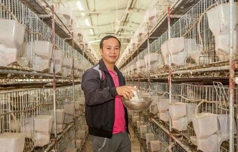 Bắc Ninh: Mô hình nuôi bồ câu của chàng kỹ sư điện tử