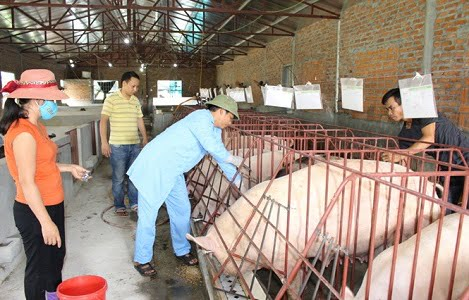 Giá lợn hơi duy trì ở mức bao nhiêu là hợp lý?