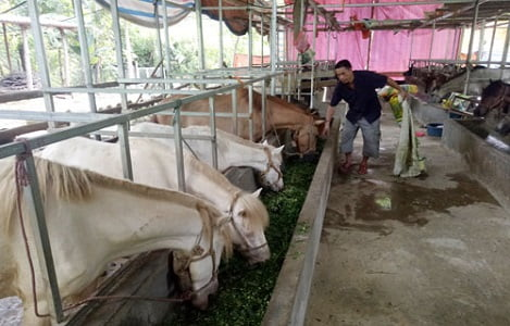 Mô hình chăn nuôi đại gia súc của ông Lộc Sỹ Dậu