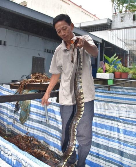 Thu nhập khá từ nuôi rắn ri tượng